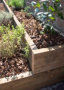 timber raised bed