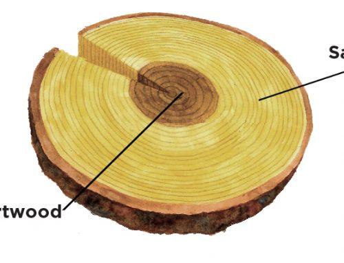 Wood durability; Heartwood & Sapwood